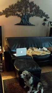 Kristi's writing habitat